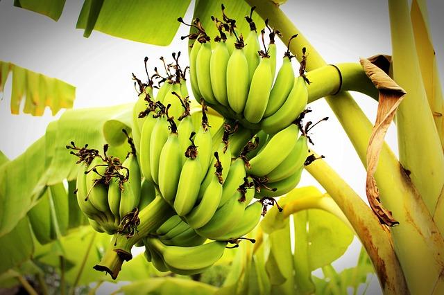 banana-1549155_640
