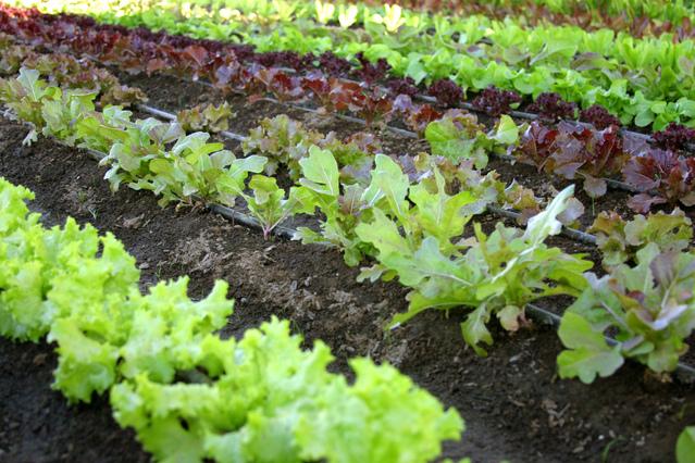 organic-vegetable-garden-1319014-639x426